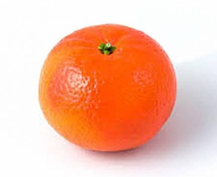 Clementine - Citrus clementina