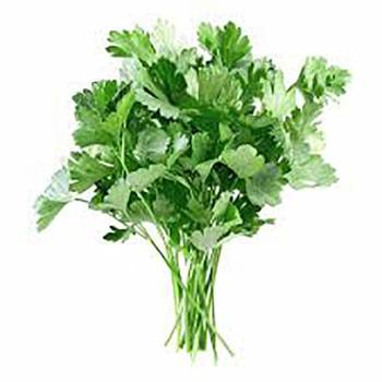 Parsley - Petroselinum sativum