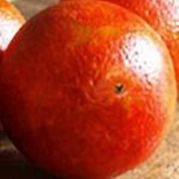 Orange Blood - Citrus sinensis