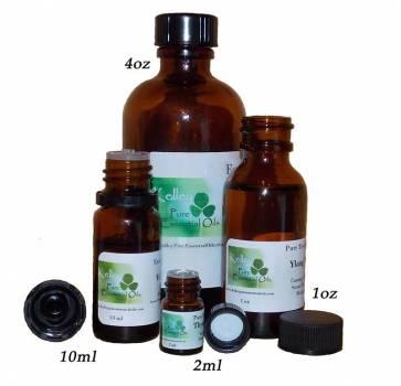 Allspice (Pimenta dioica)